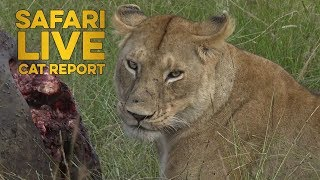 Download The Cat Report: 1 - 7 July Video