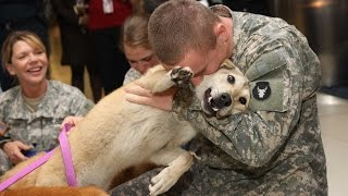 Download Dogs Welcoming Soldiers Home Compilation Video HD Video