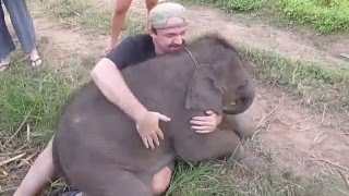 Download Baby Elephants love to cuddle Video