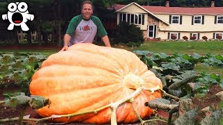 Download The Biggest Fruit & Vegetables Ever Created Video