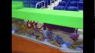 Download Marlin Stadium Fish Tank Draws Controversy Video