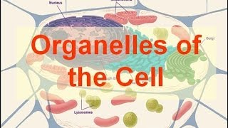 Download Organelles of the Cell (updated) Video