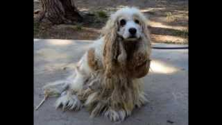 Download Dorothy of Palmdale - The story of one survivor dog dumped to die in the desert (ADOPTED SEPT 2013) Video