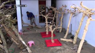 Download Batang Kopi Datangkan Omzet 25 Juta - NET12 Video