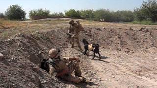 Download Taliban Goat Attacks Welsh Guardsman. Video