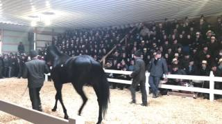 Download Amish Horse Sale Record Breaking Horse Video