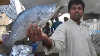 Download Fish Market in Karachi Pakistan - Bangla Bazar Video