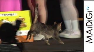 Download フォトセッションでネコが逃走!会場沸く 映画「ねこあつめの家」完成披露試写会4 Video