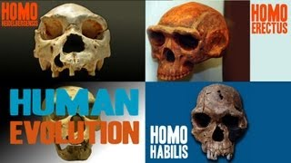 Download Facts about Human Evolution Video