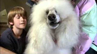 Download The Dog Who Saved Christmas Vacation Video