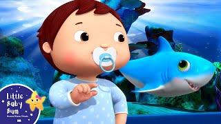 Download Baby Shark Dance   Baby Songs   +More Nursery Rhymes & Kids Songs   Little Baby Bum Video