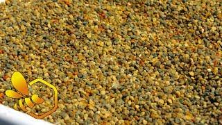 Download Pasieka Początkującego Pszczelarza - #69 Pierwszy miodek i pyłek - maj 2017 Video