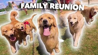 Download My Dog Has a Family Reunion Party! Video