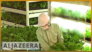Download 🇯🇵 Earthrise - Japan's Future Farms Video