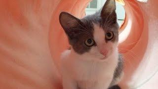 Download Kitten Close Up 2017-10-09 Video