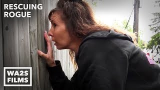 Download Suspected Dog Fighter Confronted About Puppy Caged in the Rain - Hope For Dogs | My DoDo Video
