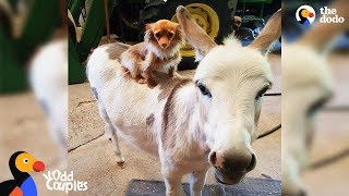 Download Dog Just Wants His Donkey Friend To Be Happy | The Dodo Odd Couples Video