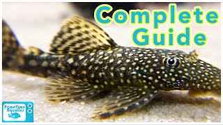 Download Bristlenose Pleco Care and Breeding Video