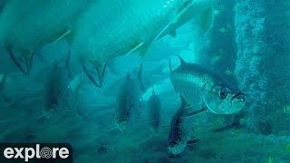 Download Deerfield Underwater Cam powered by EXPLORE.org Video
