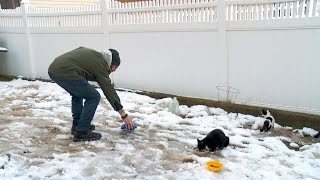 Download Feral Cats Are Freezing Video