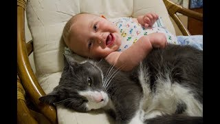 Download Cats Meeting Babies for the First Time Compilation (2015) Video