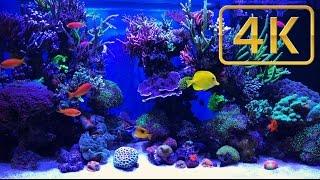 Download Schwings Reef Aquarium - 500l 4K Video