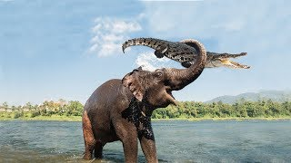 Download Amazing Mother Elephant Defeated Crocodile To Save Her Baby | Animals Save Animals Video