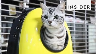 Download 10 Products Every Cat Lover Needs Video