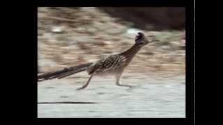 Download Roadrunner 26 mph Video