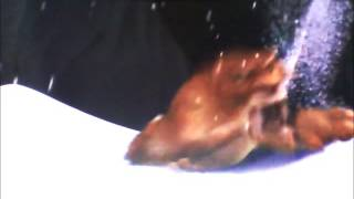 Download ″Kung Fu Shark″ Part 21 - Lenny vs. Soto/Soto's Death Video