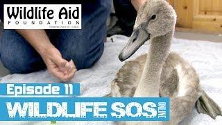 Download Wildlife SOS Online - Episode 11 Video