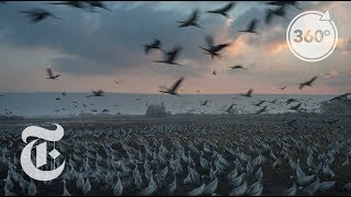 Download Feeding Half A Billion Migrating Birds At Israel Rest Stop | The Daily 360 | The New York Times Video