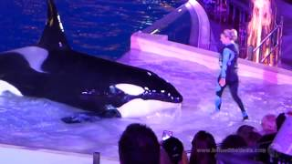 Download Shamu's Christmas Miracle - SeaWorld San Diego Full Show 2014 Video