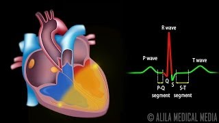 Download Cardiac Conduction System and Understanding ECG, Animation. Video