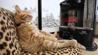 Download ストーブの前の猫 Cat to warm by a heater Video