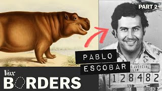 Download How this drug lord created a hippo problem in Colombia Video
