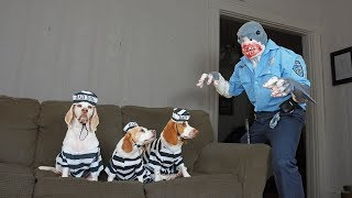 Download Dogs Arrested by Shark Cop Prank: Funny Dogs Maymo, Penny & Potpie Video