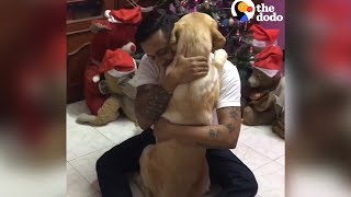 Download Dog Knows Exactly How To Comfort His Dad   The Dodo Video