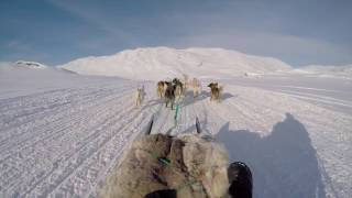 Download Dog sledding in Greenland Video