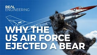 Download Why The US Airforce Ejected a Bear Video