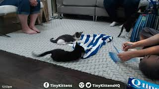 Download Kinks pack their #TinySuitcases and go home! TinyKittens Video