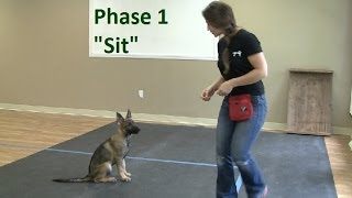 Download How to Train a Dog to ″Sit″ (K9-1) Video