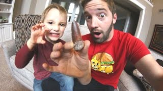 Download Father & Son GET REAL DINOSAUR TOOTH (Huge!) Video