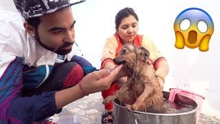 Download What Happen To My Dog 😱 Video