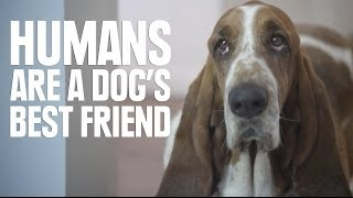 Download Humans Are A Dog's Best Friend Video