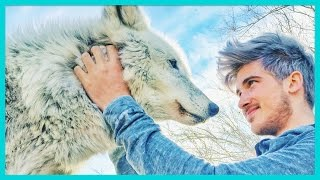 Download PLAYING WITH A REAL WOLF! Video