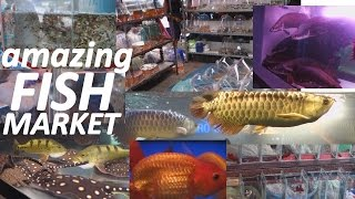 Download Aquarium Fish Market in Bangkok Thailand. WOW!!! Video