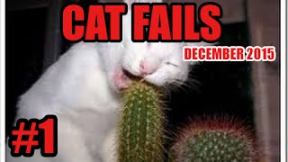 Download FUNNY CAT VINES GONE WRONG COMPILATION 2016 - CAT FAILS COMPILATION #1 Video