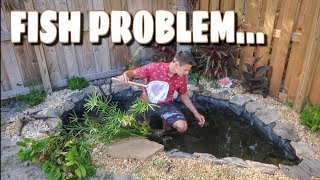 Download MINI POND FISH REMOVAL... Video