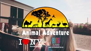 Download Your Animal Adventure Awaits! Video